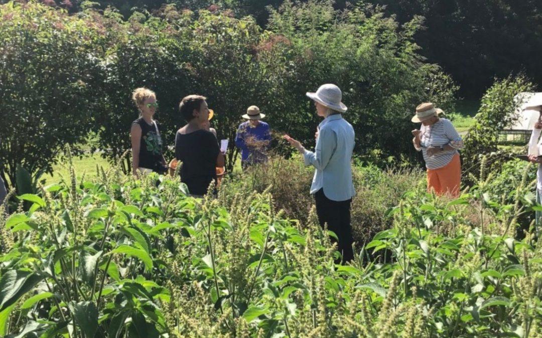 Monthly Medicinal Plant Garden Walk & Talk